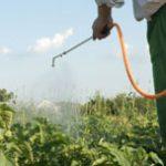 Disinfezione giardini a Rimini